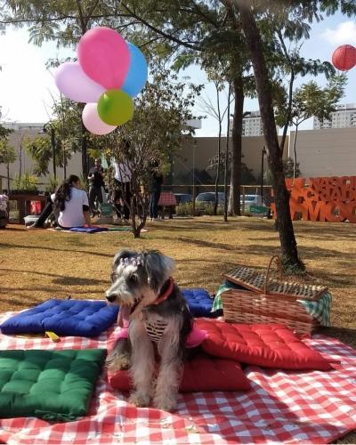 pet park shopping mooca em sp crystal pet spa (13)